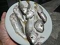 489Best foods cuisine of Bulacan 20.jpg