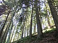 4950 Waimes, Belgium - panoramio (1).jpg