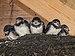 5 boerenzwaluwen op een rijtje.jpg