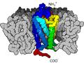 7TM4 (GPCR).png
