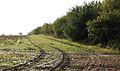 A field-woodland boundary - geograph.org.uk - 1031054.jpg