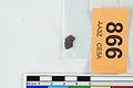 A fragment of silver pressblech foil from a helmet (FindID 555841).jpg