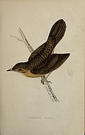 A history of British birds - by the Rev. F. O. Morris (1862) (14565795238).jpg