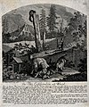 A pole cat and a weasel are hunted and killed in different w Wellcome V0021090.jpg