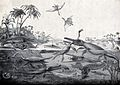 A prehistoric lake teeming with saurians eating each other o Wellcome V0023194.jpg