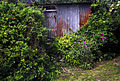 A shed opposite the Church, Monkton, Thanet, Kent - geograph.org.uk - 493883.jpg