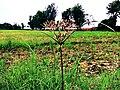 A special grass.jpg