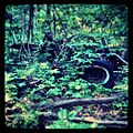 Abandoned Car of Keel Forest.jpg