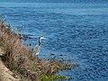 Abbott's Lagoon (37388).jpg