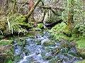 Abel Tasman Inland Track stream - panoramio.jpg