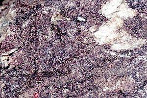 Acarospora fuscata - Image: Acarospora fuscata (EU)