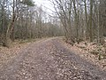 Access track in Limpsfield Chart towards Kent Chart Road - geograph.org.uk - 1755828.jpg