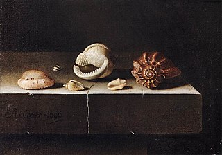 Still Life with Two Large and Four Smaller Shells