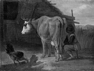 Brown cow milked by a shepherd