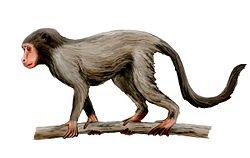 definition of aegyptopithecus