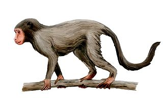 <i>Aegyptopithecus</i> species of dry nosed primate (fossil)