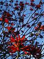 Ajuda botánico 16.jpg