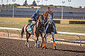 Alberta Breeders' Fall Classic 2014 - Horse Racing (15304686115).jpg