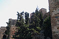Alcazaba-IMG 2784.jpg