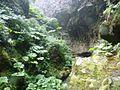 Alejandro Selkirk Island - Quebrada Las Casas 17.jpg