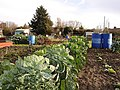 Allotments off Sandling Lane - geograph.org.uk - 89452.jpg