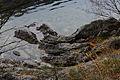 Altausseer See ost 79028 2014-11-15.JPG