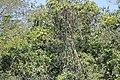 Alto Araguaia - State of Mato Grosso, Brazil - panoramio (981).jpg