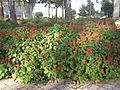 Amin al-Islami Park - Trees and Flowers - Nishapur 071.JPG