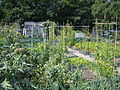 An Allotment Garden in Yorkshire.jpg