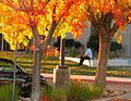 Antelope Valley College (3042335856).jpg