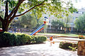 Arad duckling.jpg