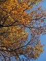Arbre en automne.JPG