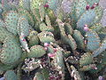 Arizona Cactus Garden 057.JPG