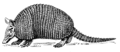 Armadillo (PSF).png