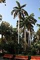 Aswan Kitchener island 4.jpg