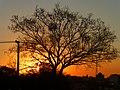 Atardecer y árbol (Oberá, Misiones) - panoramio.jpg