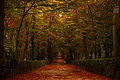 Autumn's Soul.jpg