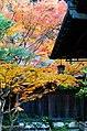Autumn Colors in Yoshikien, Nara - panoramio.jpg