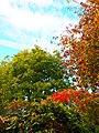 Autumn Colour (180413119).jpeg