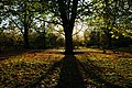 Autumn View in the Avenue of Tyne Green - panoramio - somaliayaswan.jpg