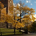 Autumn by the cathedral.jpg