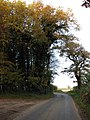 Autumn colours - geograph.org.uk - 605167.jpg