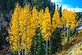 Autumn colours in SW Utah - Cedar Canyon (15468327500).jpg