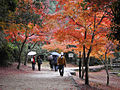 Autumn colours on Miyajima Island Japan.jpg