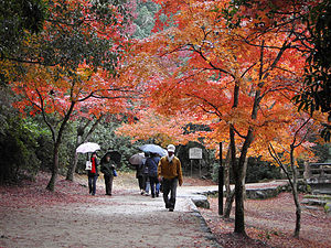Itsukushima - Autumn colours on Miyajima Island Japan