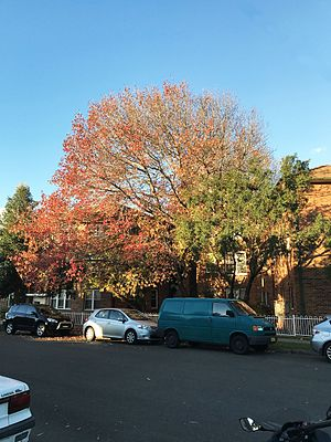 Narwee, New South Wales - Autumn in the residential area of Narwee, New South Wales