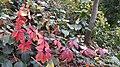 Autumn season in Butanic Garden فصل پاییز در باغ بوتانیکال تفلیس 04.jpg
