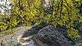 Autumn season in Butanic Garden فصل پاییز در باغ بوتانیکال تفلیس 36.jpg