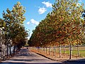 Avenida Aranjuez - panoramio.jpg