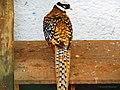 Aves exóticas - panoramio (1).jpg